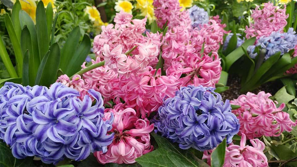 botanic-gardens-chic-sophistic